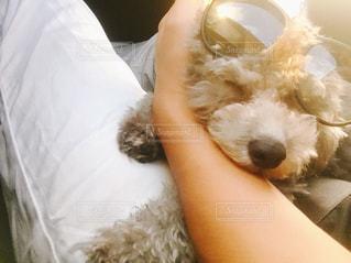 犬のベッドで寝ている人の写真・画像素材[1840777]