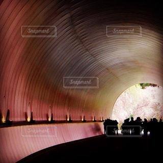 トンネルに反射する桜の写真・画像素材[1840199]