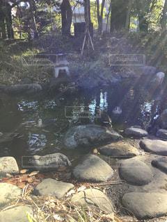 近くに池のアップの写真・画像素材[1839799]