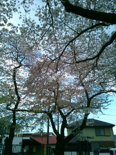 伊東公園の写真・画像素材[1842974]