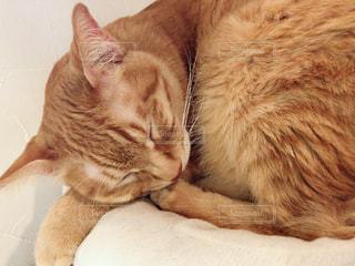ベッドの上で眠っている猫の写真・画像素材[1842381]