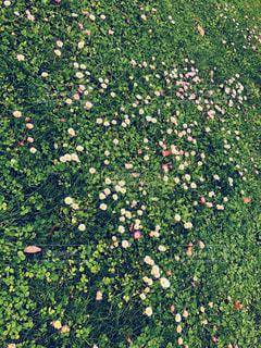 近くのフラワー ガーデンの写真・画像素材[1851903]