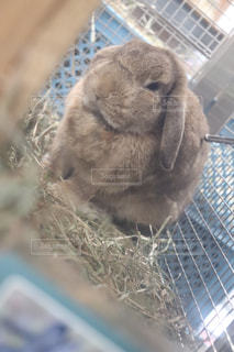 ケージの中の小さな動物のクローズアップの写真・画像素材[2093464]