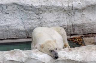 動物園囲いの中のシロクマの写真・画像素材[2110170]
