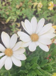 花のクローズアップの写真・画像素材[2288398]