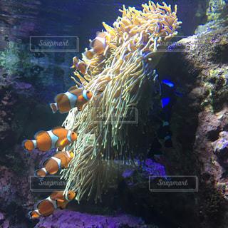 サンゴの水中ビューの写真・画像素材[1840670]