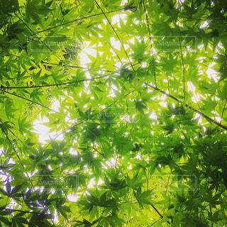 近くの緑の植物をの写真・画像素材[1841236]
