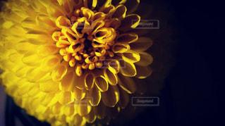 近くの花のアップの写真・画像素材[1841238]