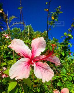 植物にピンクの花の写真・画像素材[1841325]
