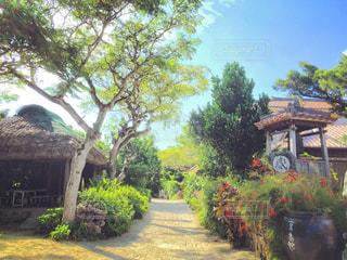 竹富島の街並みの写真・画像素材[1849114]