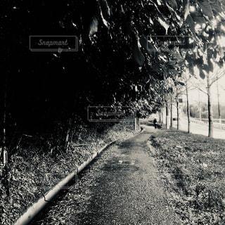 木のトンネルの写真・画像素材[1853503]