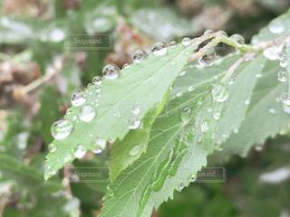 雨上がりの写真・画像素材[2345462]