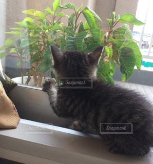 窓から外を眺めている猫の写真・画像素材[1842329]