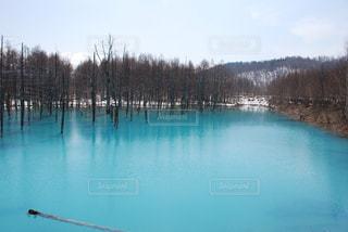 美瑛白金青い池の写真・画像素材[1851651]