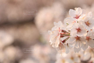 花の写真・画像素材[1984487]