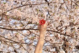 花の写真・画像素材[1984563]
