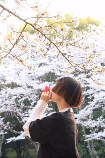 """赤い椿の花言葉""""謙虚な美徳""""の写真・画像素材[1984629]"""