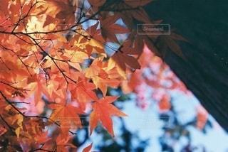 木の上の花瓶の写真・画像素材[2772756]