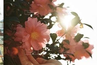 花の写真・画像素材[3103526]