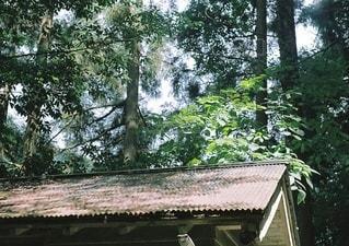 屋根に落ちる木漏れ日の写真・画像素材[3588756]
