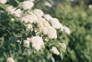 花の写真・画像素材[3588787]