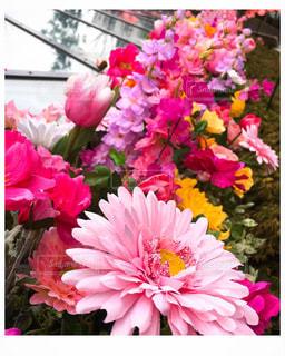 鮮やかな花の写真・画像素材[1842828]