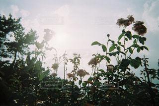 ばら園での写真・画像素材[1843636]