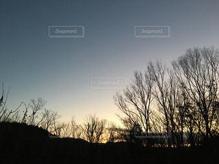 晴れた日にツリーの写真・画像素材[1843583]