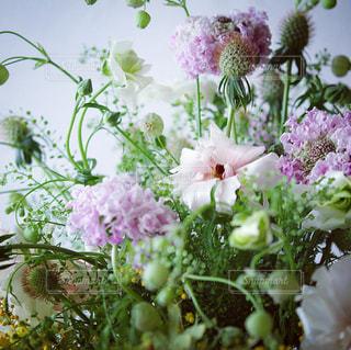 春の草花をナチュラルなブーケに。の写真・画像素材[1845023]