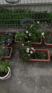 庭の植物の写真・画像素材[3354772]