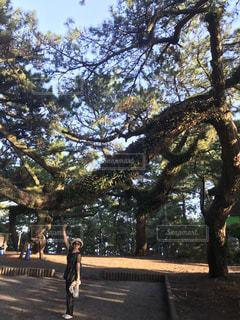 木の隣に立っている人の写真・画像素材[1847591]