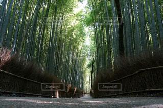 竹の道の写真・画像素材[1851140]