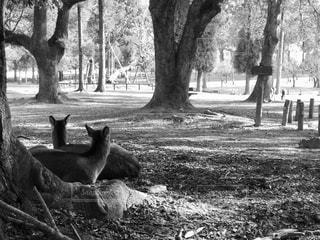 鹿の視線の写真・画像素材[1859024]