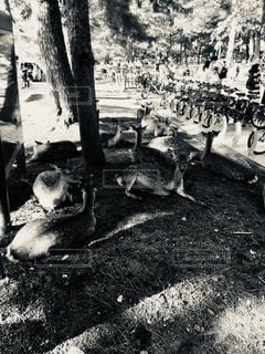 鹿の集団の写真・画像素材[1859025]