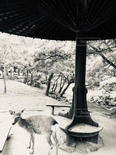 傘の下の鹿の写真・画像素材[1863903]