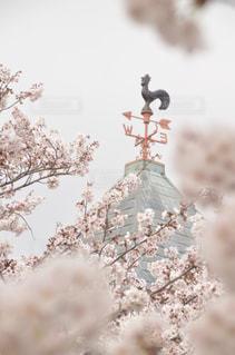桜に埋もれる風見鶏の写真・画像素材[1984176]