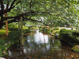 日本の庭園の写真・画像素材[1851377]
