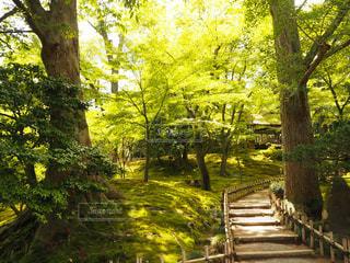 緑の風景の写真・画像素材[1851378]