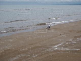 千里浜なぎさドライブウェイで出会ったカモメの写真・画像素材[1851382]