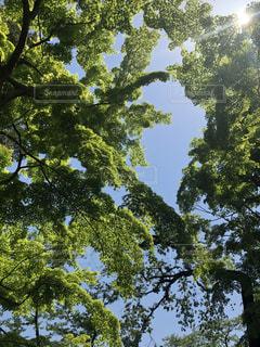 新緑と光の写真・画像素材[1855568]