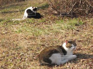 2匹のネコの写真・画像素材[1884542]