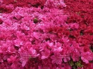 たくさんの花のアップの写真・画像素材[2099228]