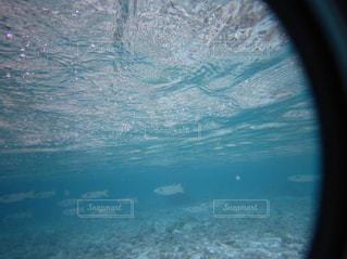 海の中を泳ぐ魚の群れの写真・画像素材[2114360]
