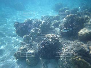 美しい海中の世界の写真・画像素材[2114368]