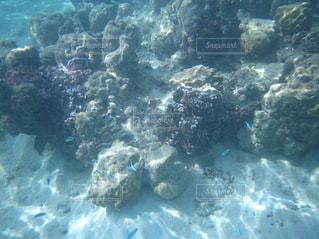 タヒチの青い魚たちの写真・画像素材[2114369]