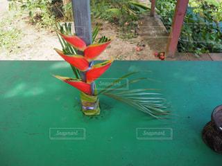 変わった植物の写真・画像素材[2116398]