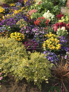 お花の写真・画像素材[1971536]