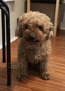 おとなしい犬の写真・画像素材[1850713]