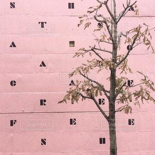 ピンクの壁の写真・画像素材[1850457]
