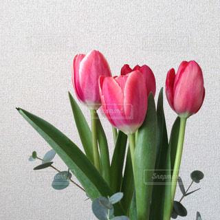 緑の葉と赤い花の上に座っての花で一杯の花瓶の写真・画像素材[1850736]